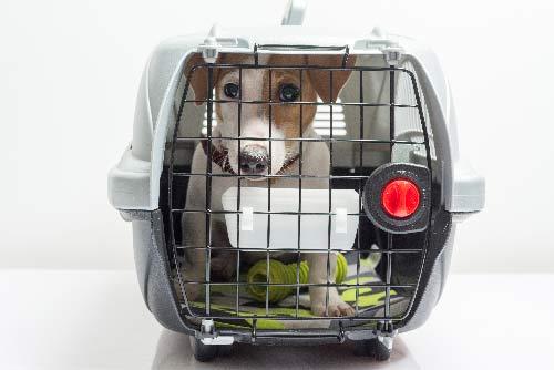 emigrar con mascotas transportin