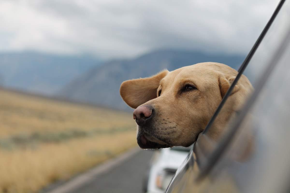 migrar con mascotas al exterior